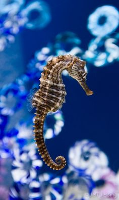 """Awesome views: """" Seahorse and Glass (by Jeff Jessing) """""""