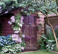 Garden shed surrounded by clematis, ferns and hostas.
