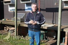 Marcel Wouters (Westmalle, BE): 1st National Ace Pigeon Small Middle Distance KBDB 2012 and first Olympiad Pigeon Middle Distance Nitra 2013   PIPA