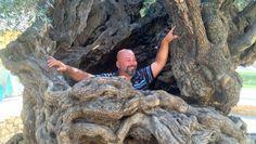Wahnsinn!! Man kann sogar in den Baumstamm rein.