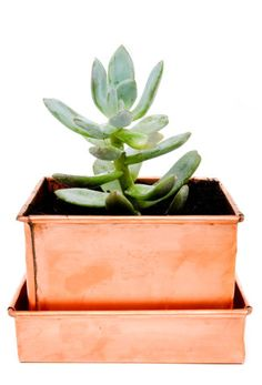 LEIF Copper Patina Planter // Fact: Succulents make great gifts, especially when they come packed in a darling copper planter. Copper Planters, Planter Pots, Planter Ideas, Cactus, Holiday Gift Guide, Holiday Gifts, Messing, Houseplants, Indoor Plants