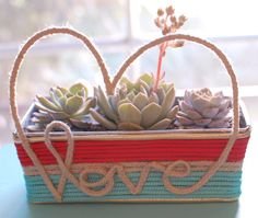 Rope/hot glue covered box planted with succulents/cacti