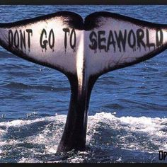SeaWorld, the perpetrator of misery on orcas, dolphins and other sea mammals since the 60s. Don't buy a ticket to SeaWorld.