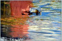 çahmut yaylası Trapzon'da sevgili esma ebrar'la birlikte gerçekleştirdiğim keyifli bir fotoğraf çalışması..