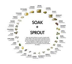 soak + sprout , remojar + germinar