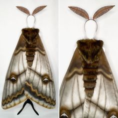 Cosplay Diy, Cosplay Costumes, Halloween Costumes, Halloween Ideas, Rosy Maple Moth, Moth Wings, Fantasy Costumes, Gothic, Butterfly Wings