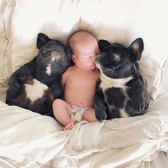 French Bulldogs protecting a Newborn Baby// #Buldog #BigDog
