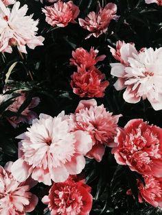Imagen de flowers, pink, and nature