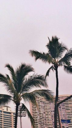 Palm Tree Iphone Wallpaper, Home Wallpaper, Cellphone Wallpaper, Lock Screen Wallpaper, Wallpaper Ideas, Iphone Wallpapers, Groups Poster, Summer Photos, Background S