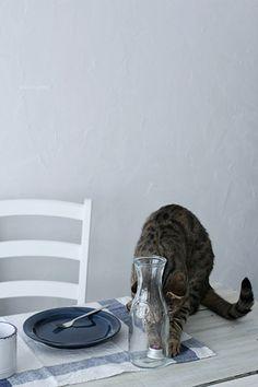 #cat 『【ねこインテリア】vol.15』