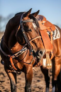 ❦ Rodeo Event Finder