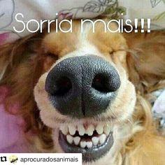 BOM SÁBADO A TODOS!❤❤ #filhode4patas #paidegatos #maedegatos #amogatos #cachorros #cachorro #cachorroterapia #maedecachorro #paidecachorro #filhode4patas #sabado #amoanimais