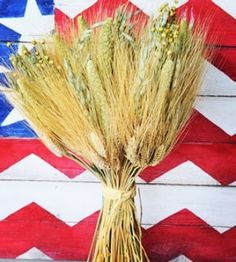 @curiouscountry posted to Instagram: 🎵🎶 Amber waves of grain! Nothing says American Farmhouse more than this all-natural Mixed Grain Wheat Bundle. It can stand on it's own or be put in a basket or vase to display. Made with American grown grains, dried to last indoors for years. Ready to ship now! #americathebeautiful #driedwheat #independenceday #summer #driedflowers #farmhouse #homedecor #curiouscountrycreations #4thofjuly #americana #amberwavesofgrain #decoration #homedesig
