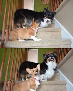 Two dogs who put aside their differences to pose for the camera.