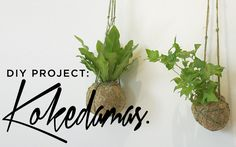 An easy step-by-step guide on how to make and grow your own Kokedama.