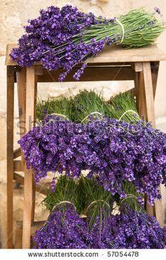 Lavender Cottage, Lavender Garden, French Lavender, Lavender Blue, Lavender Fields, Lavender Flowers, Purple Flowers, Beautiful Flowers, Lavander