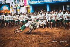 Jallikattu | Sway with the beast