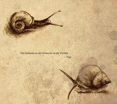 Snail Sketches by karpfinchen.deviantart.com on @DeviantArt