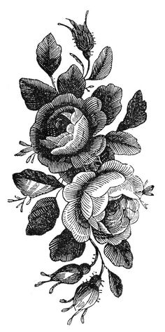 Draw Roses Vintage roses - Temporary tattoo - This listing is for one high quality temporary tattoo. Vintage Blume Tattoo, Vintage Tattoo Design, Vintage Flower Tattoo, Tattoo Vintage, Flower Vintage, Vintage Floral, Illustration Botanique, Botanical Illustration, Trendy Tattoos