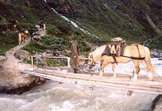 Draft Horses, Animals Images, Military History, Austria, Camel, Maine, Pony, Soldiers, Bavaria