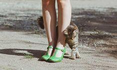 Akinek macskája van, tudja, hogy minden kis szőrös négylábú egy igazi személyiség. Ha befogadtad az otthonodba, onnantól kezdve nyomon követheted, hogyan