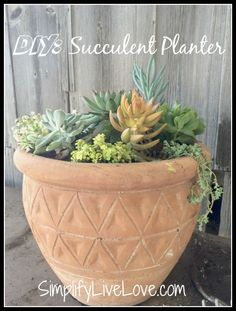 how to make your own succulent mix