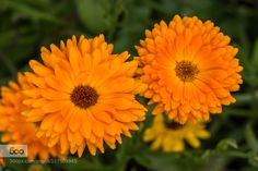 Yellow by Djem79. Please Like http://fb.me/go4photos and Follow @go4fotos Thank You. :-)