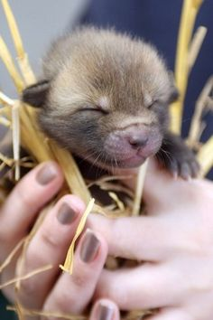 We just squealed out of cuteness. It's a baby fox - a really baby one!