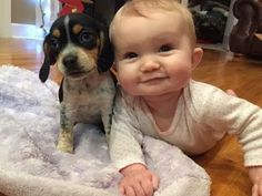 Baby and Beagle dog have funny time - Dogs and Babies are really cute and make us happy Puppy are best friend to grow up with baby - Cute Puppies and Babi. So Cute Baby, Cute Kids, Animals For Kids, Cute Baby Animals, Funny Animals, Funny Babies, Funny Dogs, Cute Babies, Cute Puppy Videos