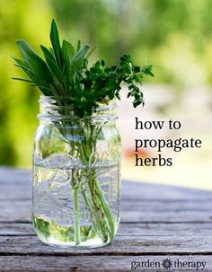 Here is an easy way to propagate your own herb garden #gardeningtips