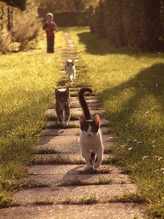 m o r n i n g . s t r o l l - Country living...mom and her cat walk thur pastures....