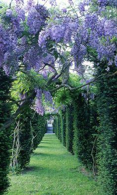 The Artful Gardener: Wisteria Allėe - Châ Flowers Garden Love Cool Landscapes, Beautiful Landscapes, Beautiful Gardens, Beautiful World, Beautiful Places, Amazing Places, Backyard Pergola, Pergola Shade, Backyard Landscaping