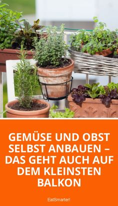 Pflanzen Balkon Small balcony garden: planting vegetables Growing vegetables and fruit yourself is a Garden Plants Vegetable, Planting Vegetables, Growing Vegetables, Growing Plants, Herb Garden, Garden Beds, Porch Garden, Fruit Garden, Micro Garden
