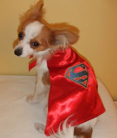Super Dog Halloween Cape 14 Superman by CreativelySew on Etsy, $5.00