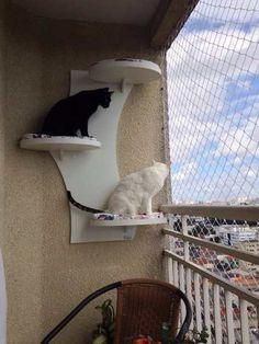 Prateleira - Móvel Para Gatos - Mini Arbo Da Cozy Gatos