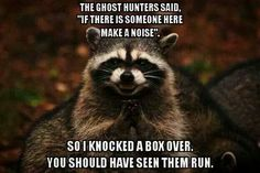 Funny pictures about Evil plotting raccoon. Oh, and cool pics about Evil plotting raccoon. Also, Evil plotting raccoon photos. Funny Shit, The Funny, Funny Stuff, Funny Things, Daily Funny, Scary Things, Scary Stuff, Crazy Funny, Funny Happy