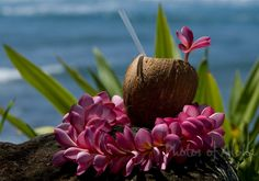 Coconut drink with a pink plumeria flower lei sitting on a lava rock at the beach. North Shore of O'ahu Exotic Flowers, Tropical Flowers, Beautiful Flowers, Tropical Party, Tropical Paradise, Beachy Colors, Coconut Drinks, Flower Lei, Rare Orchids