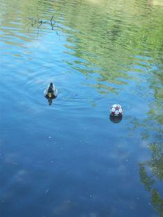 Duck-ball.