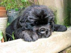 This gardening thing is very tiring!