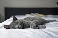 Should Your Cats Sleep With You