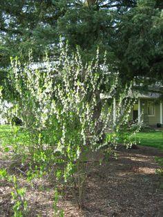 Orange Colored Fruit, Humus Soil, Plum Garden, Moth Species, How To Attract Hummingbirds, Small Trees, Native Plants, Green Leaves, Garden Plants