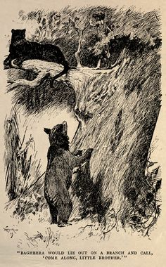 """'The Jungle Book' by Rudyard Kipling. Illustrated by John Lockwood Kipling, W.H. Drake and P. Frenzeny. Caption - 'Bagheera would lie out on a branch and call, """"come along, little brother."""" http://www.amazon.com/gp/product/1473327814/ref=as_li_tl?ie=UTF8&camp=1789&creative=9325&creativeASIN=1473327814&linkCode=as2&tag=reaboo09-20&linkId=3L6YQIKYY3GHLN3W"""