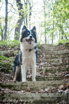 Kess went on her first hike today, she did a great job. Listened to recalls very well, didn't spook at anything, and didn't fall off any cliffs.