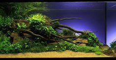 Bildergebnis für naturaquarium einrichten