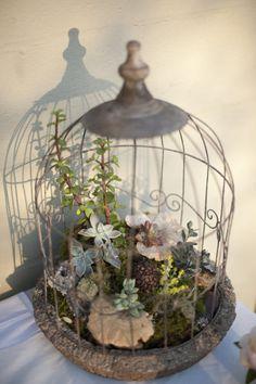 New small bird cage decor birdcage planter ideas Succulent Terrarium, Succulents Garden, Garden Pots, Planting Flowers, Planter Garden, Succulent Wall, Birdcage Planter, Small Bird Cage, Deco Floral