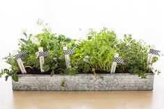 You only need a few materials to DIY this portable garden.