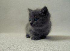 lindo gatito negro pequeño