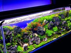 Amano Shrimp, Real Nature, Aquatic Plants, Aquascaping, Planted Aquarium, Aga, Deep Sea, Tanks, Fields