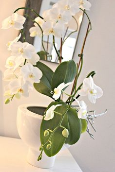 white orchid - my favorite flower !! Beautiful