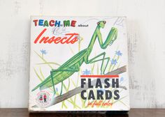 Vintage Insect Flash Cards Gelles Widmer Company Box